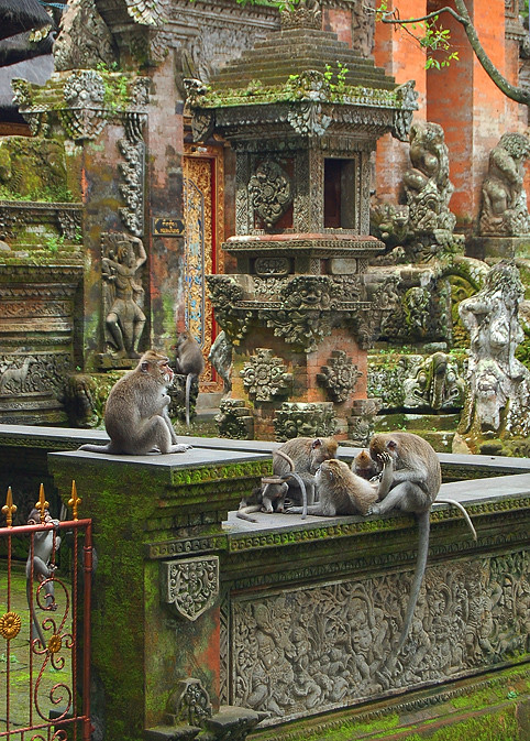 _Bali_monkeys_6_