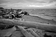 1 Day in September (4oClock) Tags: wood old bw white lake canada black west water monochrome 30 river mono town wooden nikon northwest timber nt f14 debris great north shoreline sigma nwt driftwood shore remote hay discarded dslr territories slave drift d90