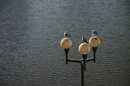 Birds on a lamp