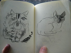 Cat sketches