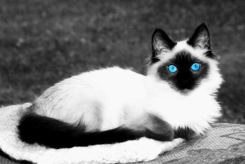 Baby's Got Blue Eyes...Like a Deep Blue Sea On a Blue, Blue Day