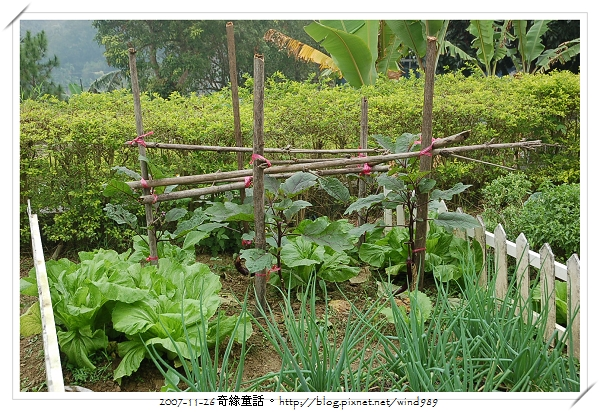 DSC_9914和興國小_菜園