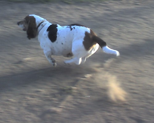 Hover Hound