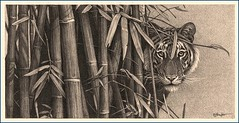 'Eye to Eye' - Bengal Tiger - Fine Art Pencil Drawings www.drawntonature.co.uk (kjhayler) Tags: pictures portrait blackandwhite art pencil portraits print big artwork image pics wildlife tiger picture illustrations drawings images bamboo naturalhistory jungle tigers prints bengal tigress animalart wildanimals animalprints bengaltiger kanha wildlifeimages drawingpictures animalpictures wildlifeart animalscats tigereyes wildlifephotography indianwildlife wildlifephotos bengaltigers kanhanationalpark animalphotos animaldrawings wildlifeartists indiantiger naturepictures tigerprints photographingwildlife tigerportrait wildlifeportraits wildpictures wildlifepictures animalspictures wildlifepicture tigerdrawing openedition tigerphotos wildlifeartist wildlifedrawings indiananimals drawingphotographs kevinhayler animalstigers wildlifetigers imagestigers indiantigers tigerimages photostigers picturestigers picturestiger portraittiger portraitstigers picturetiger imagetiger drawingtiger tigerportraits
