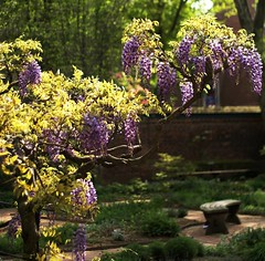 Come sit in the garden (moocatmoocat) Tags: flowers philadelphia hospital garden bench pennsylvania na ww lm wisteria aplusphoto