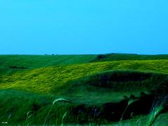 tra cielo e terra (maumon2008) Tags: primavera natura giallo cielo fiori azzurro prato grano naturesfinest pianetaterra