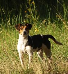 """Hello"" (ardumpln1) Tags: dog pet nature kin"