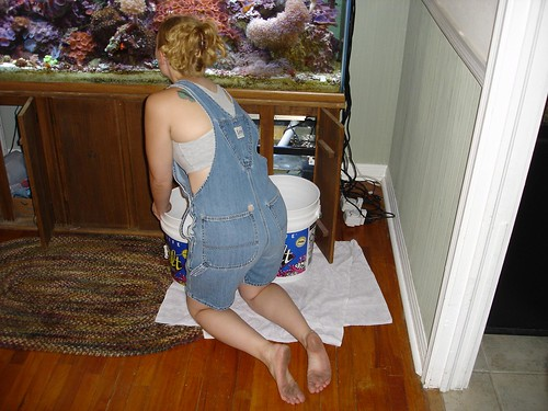sarah legs bib salt dirty fishtank blond lee barefoot overalls rug denim barefeet hardwoodfloors shouldertattoo refugium sump coralreef hairclip livecoral saltwaterfish barfuss frags bareshoulders hairup noshoes fragging redmushrooms graysportsbra barfus staticshocktattoo fishtowels 125gallontank notwearingshoes ousdvwe asd992dc