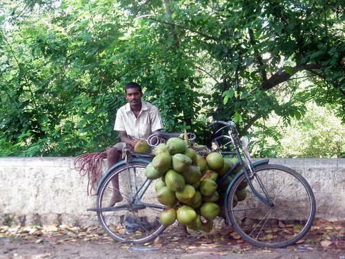 The Coconut Seller