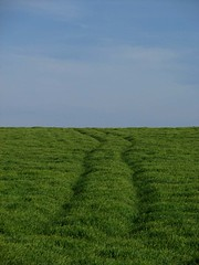 Tracce (Stranju) Tags: ciao tracce stranju sardegna italia sardinia italy campidano pinura campo erba grano