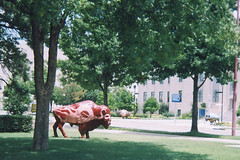 Spirit of the Buffalo (aimeedars) Tags: aimeedars summer 2004 buffalo spiritofthebuffalo oklahoma ok publicart paintedbuffalo paintedsculpture painted statue