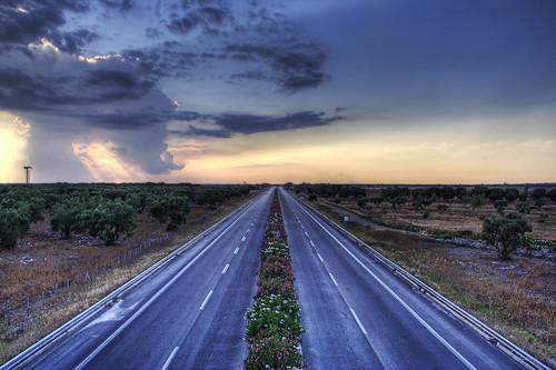 olive motorway - salento, puglia, italy