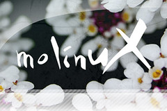 Molinux Adarga 4.0 - Splash II