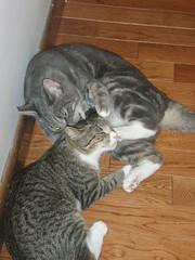 P7200017 (catling42) Tags: animals river kitties mal