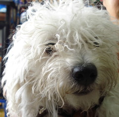 GREUDO (Gioser_Chivas) Tags: dog perro mascota mamifero
