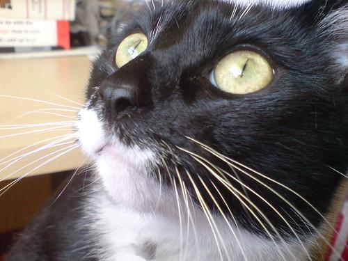 Mattie, close up