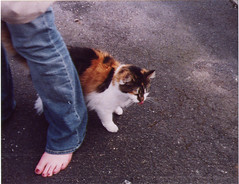 cat's foot (with a cat)