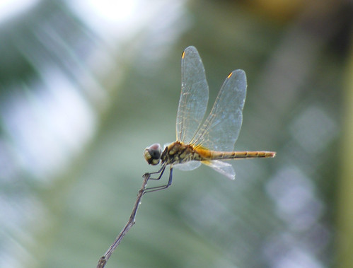 cool dragonfly