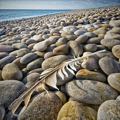 remains of the day (petervanallen) Tags: camera uk sea sky detail macro texture beach photoshop portland landscape coast nikon raw map perspective feather pebbles adobe dorset tone hdr jurassic masking chesilbeach chesil selective topaz adjust adobecameraraw jurassiccoast d90 sigma1020 tonemapping d80 1exp petervanallencom