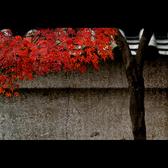 Shinnyodo temple (Masahiro Makino) Tags: japan wall photoshop canon temple eos maple kyoto adobe   tamron 90mm f28 lightroom   shinshogokurakuji 40d  20071126155222canoneos40ds640pp