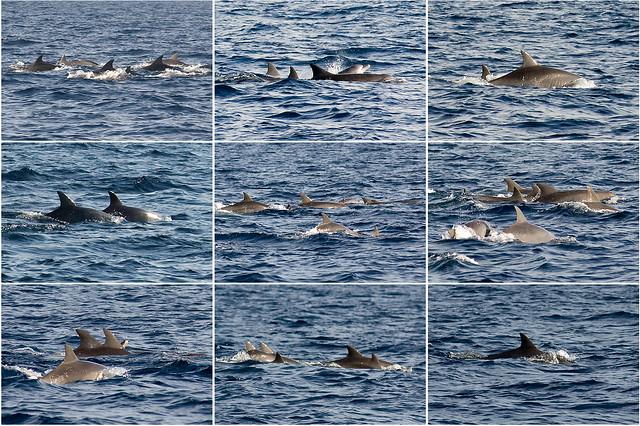 2008.09.28 Bohol Dolphin