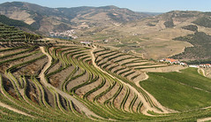 Since 1756 (Joo Morais) Tags: unesco vineyards grapes douro oporto 1756 vinhas vinhodoporto vindima dourovinhateiro sojoodapesqueira socalcos ilustrarportugal goldstaraward srieouro regiovinhateira demarcada