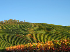 Spoilt by the Sun - Vineyard Landscape in Germany (Batikart ... handicapped ... sorry for no comments) Tags: travel blue autumn red sky orange plants mountain mountains green rot fall nature leaves lines forest canon germany square landscape geotagged deutschland landscapes vineyard vines flora colours wine herbst natur pflanzen himmel f100 berge foliage greenery geology grn blau blatt leafs landschaft bltter blauerhimmel indiansummer wein weinberg landschaften canonpowershot a610 kappelberg fellbach geologie badenwrttemberg linien canonpowershota610 herbstfarben herbstfrbung 100faves topshots buesky abigfave viewonblack anawesomeshot aplusphoto holidaysvacanzeurlaub favemegroup3 favemegroup6 theunforgettablepictures batikart elitephotography goldstaraward 100comemntgroup 201204 gettygermanyq4