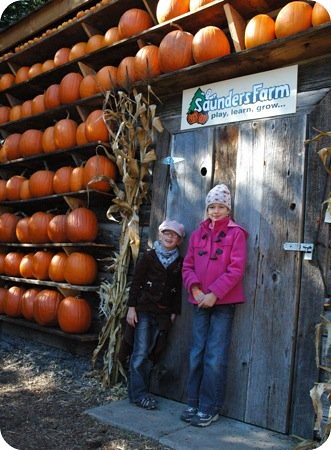 Wall o' pumpkins at Saunders Farm