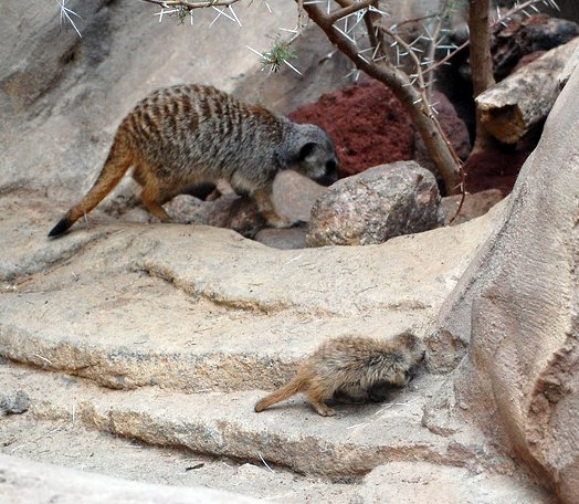 zoo 493