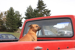 (Just kronis!) Tags: dog lakewakatipu tekapo