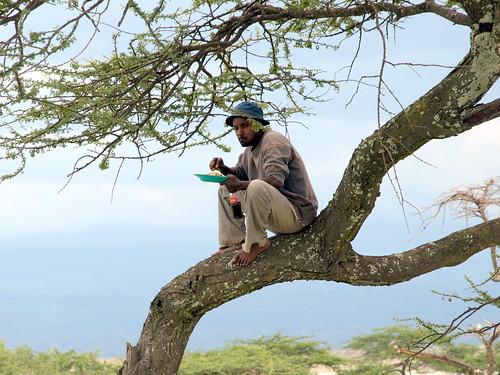 Picnic en el árbol