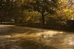 Forecast Calls For Bright Sunshine And Heavy Rain