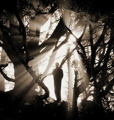 magical light (louie imaging) Tags: california bridge trees light portrait bw halloween fog night self john fun photography golden twilight gate san francisco day photographer dynamic bokeh marin dream foggy photographers blurred sharp study headlands reality imagination louie rays depth silouhette headland endless