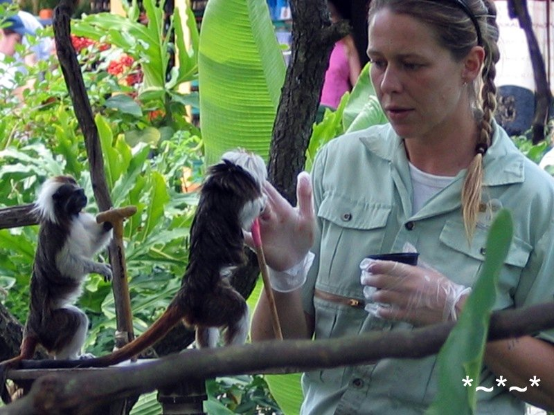 IMG_0330-Disney-Animal-Kingdom-Tamarin-2004