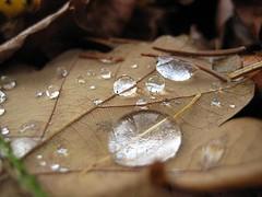 Blatt makro / leaf macro