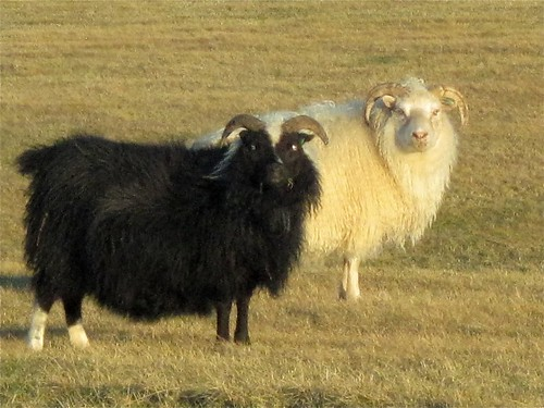 Yeah, I am the Black Sheep in the Family, So What?