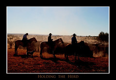 Holding the Herd (Outdoor Exposure by Denise) Tags: cowboy cattle shipping ranching