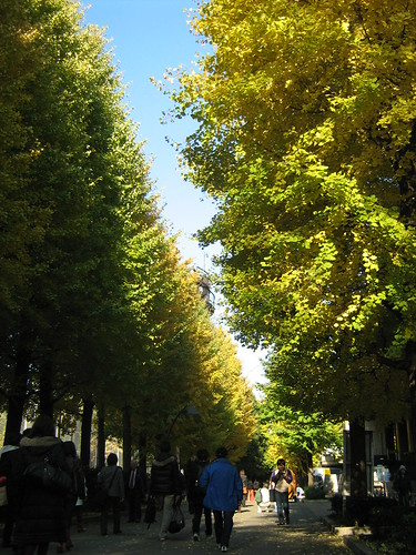 Walking past the trees of Ueno Park