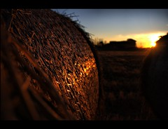 Abandoned Haybales (! .  Angela Lobefaro . !) Tags: trip travel sunset vacation italy castle abandoned nature leaves landscape geotagged countryside interestingness italia rice dusk quality patterns country gimp explore campagna piemonte abandon cielo nubes linux hay bales chateau schloss biella frontpage ubuntu idyllic middleages piedmont castillo chateaux allrightsreserved burg italians 2007 haybales medioevo middleage mittelalter kubuntu rotoballe digikam firstquality explored i500 cesvi natuzzi xti mediovale biellese mywinners holidaysvacanzeurlaub angiereal maxgreco angelalobefaro angelamlobefaro lobefaro wwwcesviorg massimilianogreco