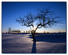 Winter Sunrise (Lisa-S) Tags: morning blue winter snow ontario canada cold sunrise canon landscape lisas silhouettes explore golfcourse 333 contrejour allrightsreserved invited tistheseason onblue caledon naturesfinest blueribbonwinner 50d supershot 3436 canon50d theunforgettablepictures betterthangood goldstaraward tup2 librarycontest magicdonkeysbest bantysroost mdtbmasterpiece onebookonebrampton getty2009 soldongetty copyrightlisastokes getty20091008