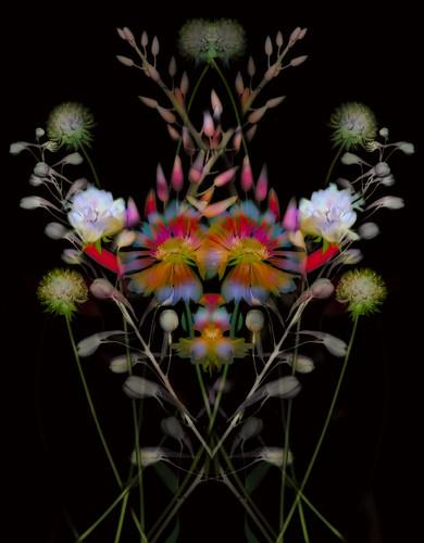 Flowernalia