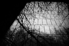 Nature and the city (morf*) Tags: uk trees england blackandwhite london architecture concrete modernism social housing modernist roehampton altonestatealtonestate natureandthecity