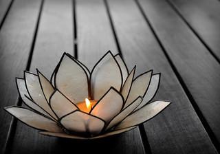 Flor de Loto / Lotus Flower