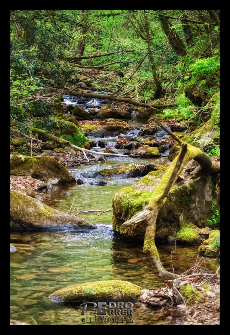 Río Barcenillas - Cabuérniga  - Cantabria