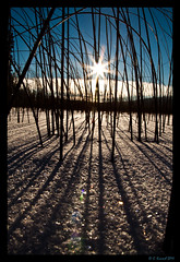 Reed Between The Lines (AlpineEdge) Tags: winter shadow sky sun lake snow mountains cold color reflection reed nature lines backlight clouds reeds relax outdoors frozen cabin shadows bc bokeh interior horizon sunny bluesky freeze shade flare kamloops backlit brrr sunstar whiteblanket laclejeunelake