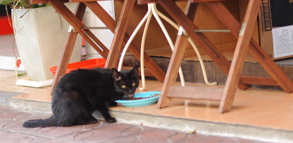 拍什麼拍  沒看過貓吃飯唷