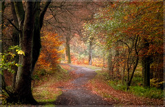 Chopwell - Warmth of autumn