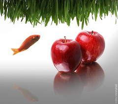 Happy Norouz (Mitra Mirshahidi-) Tags: new red fish reflection green apple year persia newyear iranian orang happynewyear greengrass norouz   1387   2apple  diamondclassphotographer flickrdiamond