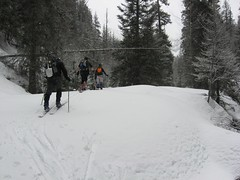 Skinning Through Low-Angle Trees