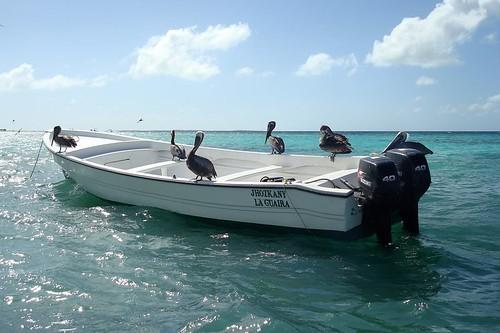 ocean sea geotagged island mar venezuela sony pelican caribbean motorboat ilha archipelago lancha oceano losroques caribe américadosul pelicano arquipélago